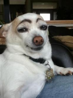 This suspicious dog. | 50 Most WTF Animal Pics Of The Year: Funny Animals, Doggie, Draw Eyebrows, Giggle, Dogs, Funny Stuff, Funnies, Smile