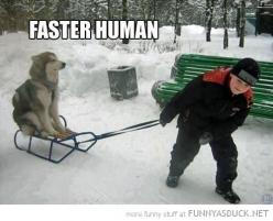 This would definitely be Willow. Laziest dog I've ever seen.: Animals, Dogs, Husky, Funny Stuff, Faster Human, Funnies, Funny Animal