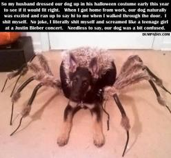 This would scare the shit out of me too. I love dogs but I absolutley hate spiders!: Animals, Dogs, Halloween Costumes, Funny Stuff, Funnies