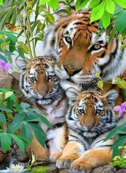 Tiger family: Wild Animal, Big Cats, Animals, Tiger Family, Bigcats, Beautiful, Wild Cats, Tigers, Families