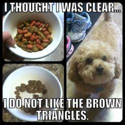 Too funny.: Animals, Dogs, Brown Triangles, Picky Eater, Thought, Funny Stuff, Funnie