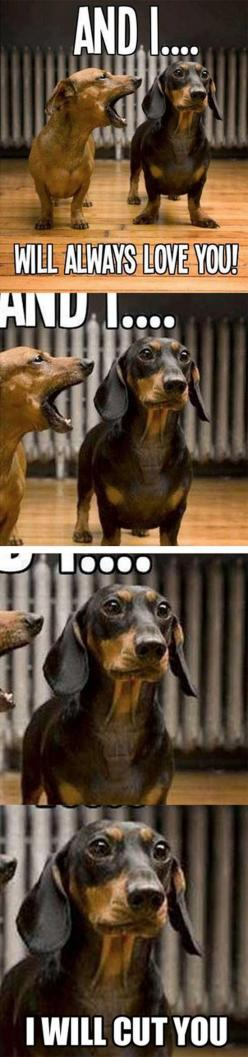 Top 25 Funny Animals Photos and Memes: Dogs, Stuff, Dachshund, Doxie, Funnies, Funny Animal, So Funny