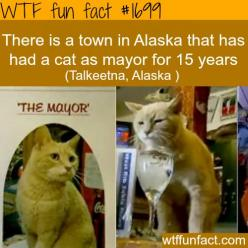 Town in Alaska that has a cat as a mayor - WTF fun facts HAHAHAHAHA what???: Wtf Fun Fact, Cats, Wtf Facts, Weird Facts, Funny, Fun Facts, Wtffunfact, Random Facts, Cat Mayor