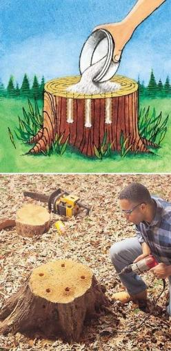 Tree Stump Removal - Get rid of tree stumps by drilling holes in the stump and filling them with 100% Epsom salt. Follow with water, and wait. Live stumps may take as long as a month to decay, and start to decompose all by themselves.: How To Remove, Gard