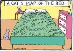 True, except the pillows would be the cats also, cause no one can possibly sleep with out the cat laying on your face: Cats, Cat S Map, Animals, Beds, Maps, Funny, So True, Cat Lady