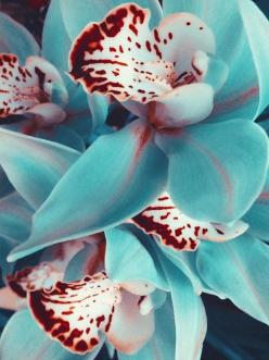 Ummad Ul Haq is using Pinterest, an online pinboard to collect and share what inspires you.: Blue Orchids, Idea, Nature, Color, Wedding, Beautiful Flowers, Garden, Flower
