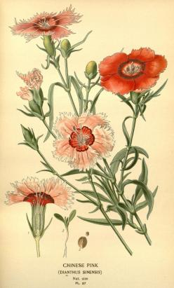 v. 1 - Favourite flowers of garden and greenhouse / - Biodiversity Heritage Library: Biodiversity Heritage, Favourite Flowers, Botanical Flowers, Botanical Prints, Botanical Illustrations, Art Botanical, Greenhouses, Gardens, Botanical Art
