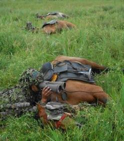 War Horses. Highly trained, and against all their instincts these horses will lay still during a battle. An example of incredible trust and bond between man and animal.: Hero, Lay, Incredible Trust, War Horses, Horses ️, Beautiful Horse, Animal