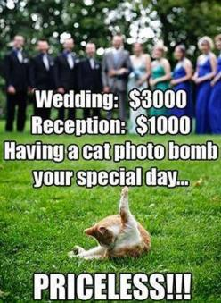 What's funny about this pic is the idea of a $3000 wedding.: Photos, Cats, Photobomb, Animals, Wedding, Funny Stuff, Photo Bombs, Funny Animal