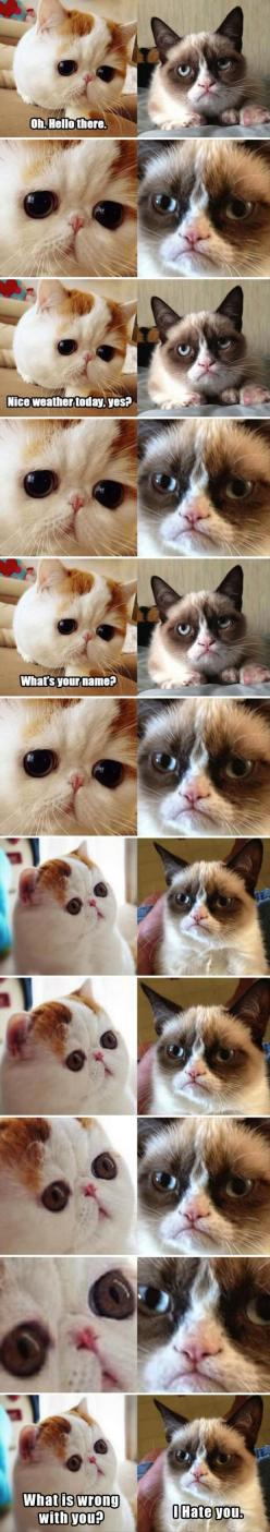WHAT'S WRONG WITH YOU?! Lol... I am Sad Cat... You May May are Grumpy Cat... This is how I feel most of the time...lol.: Animals, Cute Cats, Grumpycat, Funny Stuff, Meets Grumpy, Cat Meets, Grumpy Cat, Snoopy