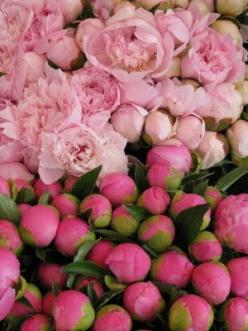When it comes to pink peonies, the bigger the better. Photo by Michael Hampton: Favorite Flowers, Rose, Color, Michael Hampton, Pretty Pink, Bloom, Garden, Pink Peonies, Flower