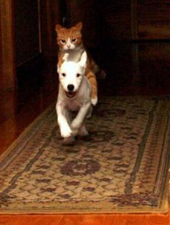 When mom and dad are away, we play!: Cat Face, Animals, Ho Silver, Dogs And Cats, Pet, Funny, Cats And Dogs