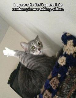 When you know you've gone too far with picture taking of your day.,...: Random Pictures, Funny Animals, Cat Face, Funny Cats, Crazy Cat, Funnies, Cat Lady