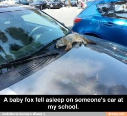 Why hasn't this happened to me?: Car, Fall Asleep, Babies, Awwww I, Animals, School, Baby Foxes, Pet Fox