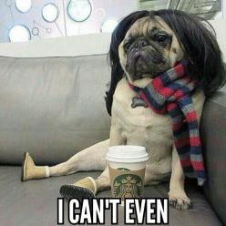 Wig wearing pug is feeling quite smug. Not every pug has the boots they call Ugg!: Animals, Dogs, Pug Life, Funny Stuff, White Girls, Pugs, Funnies, Photo