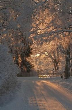 winter wonderland; I'm not the biggest fan of snow, but it does have a quiet beauty that no other element of nature has, in my opinion.: Picture, Snow, Winter Wonderland, Beautiful, Christmas, Winter Scenes, Photo