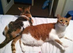 14 Year Old Brother and Sister Cats Leave Shelter for a Home Together! | Blog News: Kitty Cats, Critter, Adorable Animals, Kitty Things, Senior Cats, Awesome Cats, 14 Year