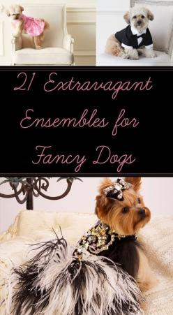 21 Extravagant Ensembles For The Fanciest Dog You Know: Extravagant Ensembles, 21 Dog, Fanciest Dog, Animals, Buy, 21 Extravagant, Dog Things, Doggie Fun
