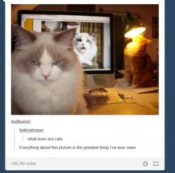 21 Times Tumblr Told The Truth About Cats. Everything about this picture is the greatest thing I've ever seen.: Cat Pictures Funny, Orange Cat, Funniest Pictures Ever, Funny Cat Pictures, Humorous Cats Funny, 21 Times, Funny Tumblr Pictures, Animal, F