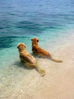 """Hey....I think I see a Boat finally""!!!   Doggie 2, ""Nooo, I've told you before, that's just another tiny Island! Go play with your Coconut - who you named ""Cocco"", you,  ""Nut""! (LMYBOBT!! - Great pic, but suddenly &#3"