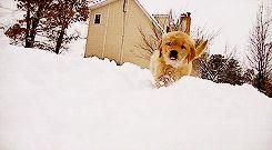 5 Tips To Keep Your Dog Safe During A Blizzard: Animals, 245 135, 13 Reactions, Animal Photography, 13 Dogs, Blizzard Thing