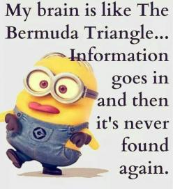 50 Best Minions Humor Quotes #Minions #Coool: Minions Humor, Brothers Quote, Minion Quotes, Funny School Quote, Funny Saying, Minions Quotes, Funny Minions, Bermuda Triangle
