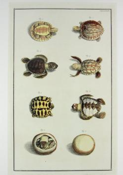50 OFF  Baby Turtles  Ocean Marine Sea Life by OldTimersClub, $10.00  - Cute for future room too: Hatching Baby, Babies, Tortoise Herpetology, Art, Tortoises, Sea Turtles, Baby Turtles