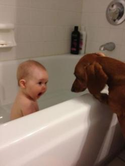 6-month-old daughter, Anne, taking her first big girl bath with a surprise guest. her face is too much!: Babies, Animals, Dogs, Privacy, Funny Picture, Funny Stuff, Funnies, Kid