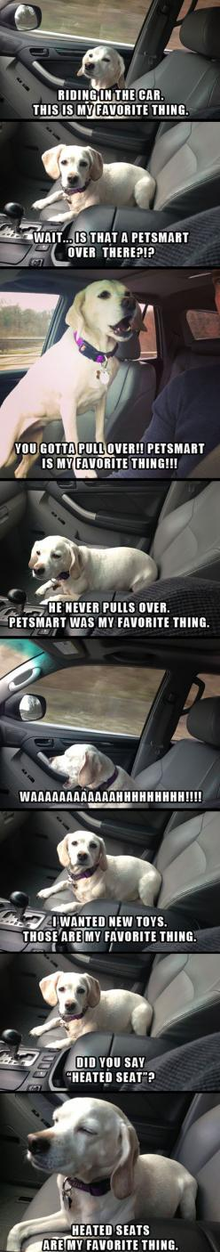 A Dog's Favorite Thing: Funny Animals, Favorite Things, Funny Dogs, Animals Dogs, Funny Pictures, Funnypictures, Dogs Cats Animals, Funnies