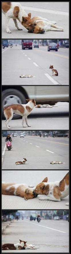 A dog rescues his injured friend risking his own life.....dogs are the best friend to all: Animals, Dogs, Sweet, Friends, Dog Feels, My Heart, Animal Stories, So Sad, Human