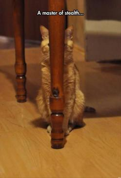A master of stealth...: Cats, Can T, Animals, Funny Cat, Cant, Funny Animal, Case, Kitty