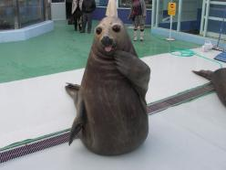 """A seal in the act of saying, """"Who, me?""""   50 Animal Pictures You Need To See Before You Die: Funny Animals, Animal Pics, Seals, Animal Pictures, Funny Pictures, Funny Stuff, Funnies, Photo, Adorable Animal"""