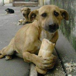 """A small boy when asked why he was feeding the dogs in Brazil said the dog had no one to love him and no food. He was told there are so many dogs that it would not make a difference. """"It makes all the difference in the world to this one,"""" he replie"""