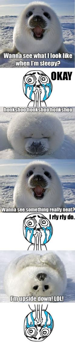 Adorable OMG: Seals, Animals, Stuff, Funny, Things, Honkshoo Honkshoo, Baby Seal