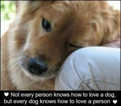 Amen.  Wish more people were as loving as our beloved dogs...: Animals, Sweet, Dogs, Quotes, Pets, So True, Puppy, Friend