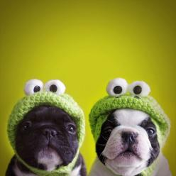 """@Amy Edwards YES PLEASE!! Toga would loveeee this! """"@Lauren Hunke please do this to your dogs with the turtle backpack!?!?"""": Frog Dog, Animals, Dogs, So Cute, Pet, Puppy, Frogs"""