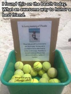 ... and I'm sobbing...: Animals, Idea, Sweet, Dogs, Pet, In Loving Memory, Memories, Friend