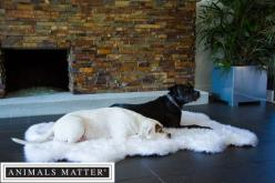 Animals Matter® Orthopedic Faux Fur Shag Rug.: Ortho Shag, Sharing Animals Matter, Beds, ️Animals ️, ღღ Animals, Animals Products Info Tips, Shag Rugs