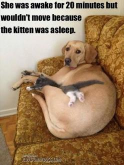 Another reason why dogs are the best!: Cats, Funny Animals, Kitten, Dogs, Friends, Sweets, Pets