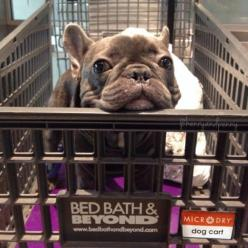 As an avid dog lover and owner, this list of dog - friendly stores where you can shop with your pup is pretty excellent. A lot of these I never would have guessed!: Pretty Excellent, Dogs, Dog Lovers, Avid Dog, Friendly Stores, Animal
