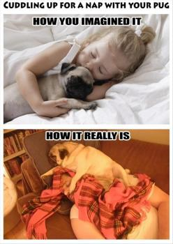 ATTACK OF THE FUNNY ANIMALS – 42 PICS: Animals, Dogs, Pug Life, Pet, So True, Pugs
