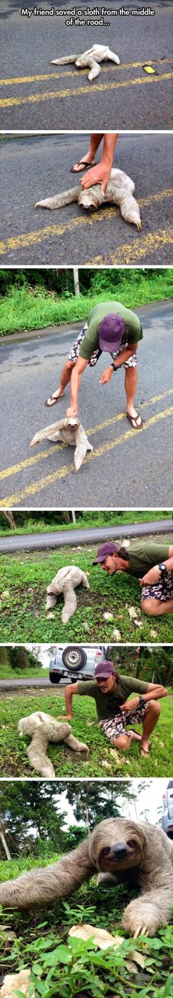 Awww...: Random Pictures, Sloths Funny, Faith In Humanity Restored, Sloths ️ ️ ️, Faith Restored, Awww Sloths, Road, Friend, Animal