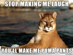 Bad Pun Puma - Imgur: Giggle, Animals, Pumapants, Funny Stuff, Funnies, Pumas