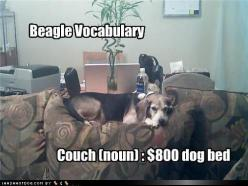 Beagle and Westie Vocabulary. Alice's favorite spot is a custom made chair: Funny Animals, Beagles Funny, Funny Dogs, Animal Funnies, Funny Animal Pictures, Animals About Dogs, Pet, Dogs Beagles
