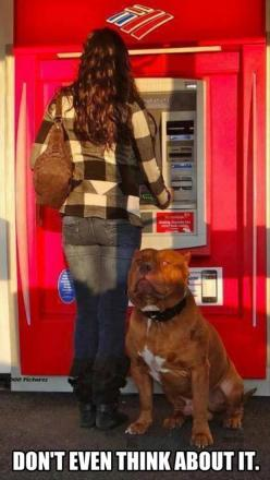 Beautiful Dog...really. Pic is funny but not Ha! Ha! Funny Pictures Of The Day – 91 Pics: Animals, Dogs, Funny Pictures, Funny Animal, Guard Dog