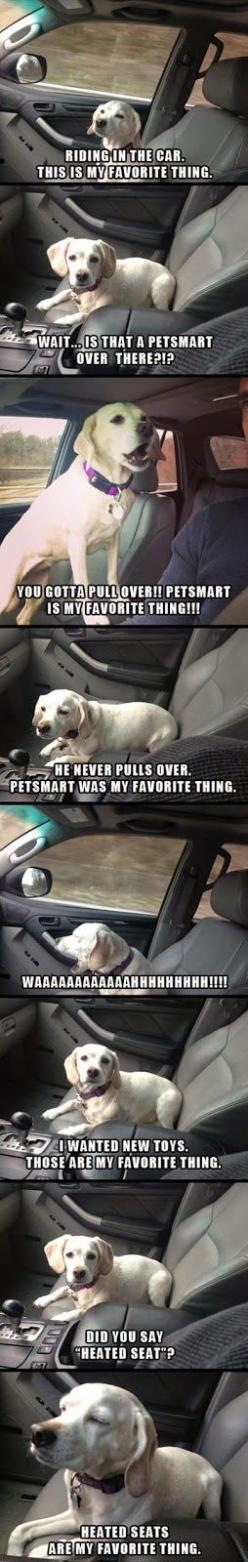 best things: Dogs, Favorite Things, Heated Seat, Funny, Puppy, Animal