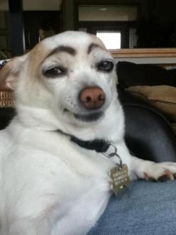 Bored? Draw eyebrows on your dog and laugh until his next bath. Hellooooo ladiesss!: Funny Animals, Doggie, Draw Eyebrows, Giggle, Dogs, Funny Stuff, Funnies, Smile
