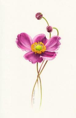 Botanical Art Painting ~ Eunike Nugroho  #floral #illustration: Art Paintings, Anemone Tattoo, Flower Illustrations Art, Floral Illustrations, Art Flowers, Anemone Flower Watercolor, Botanical Art, Anemones