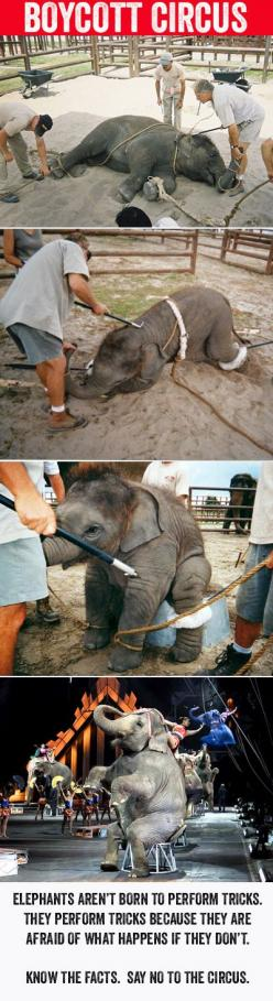Boycott the Circus!  Know the facts...  Elephants aren't born to perform tricks.  They perform tricks because they are afraid of what happens if they don't.: Circus Animals, Elephants Perform, Circus Elephants, Animal Cruelty, Cruelty To Animals,