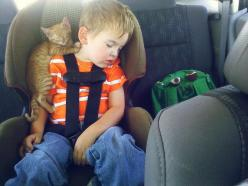 Cat Asleep on a Boy in the Back of the Car | The 100 Most Important Cat Pictures Of All Time: Cats, Animals, Pets, Kittens, Boy, Photo, Friend, Kid